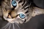 gatto,felini,miao,fantasy